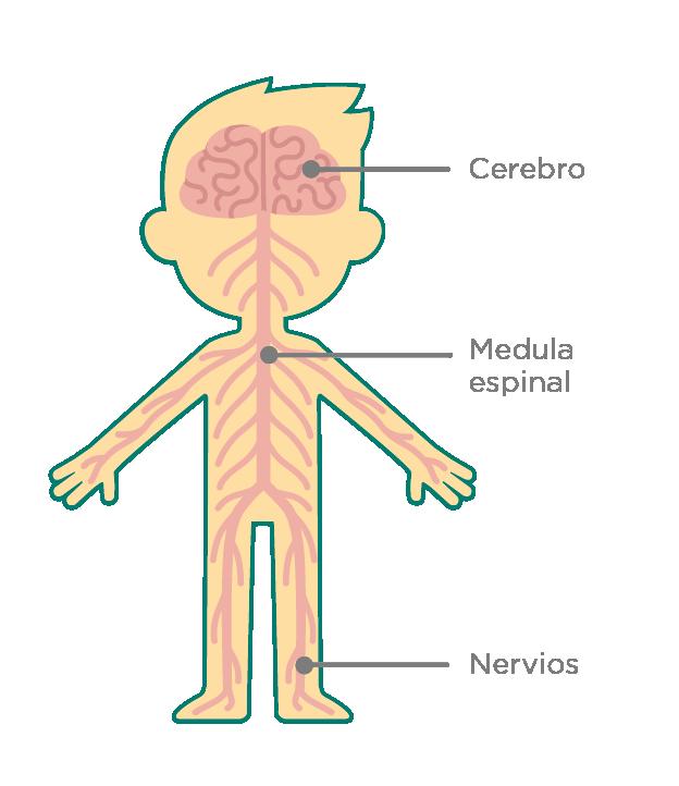 icono esquema de esclerosi múltiple
